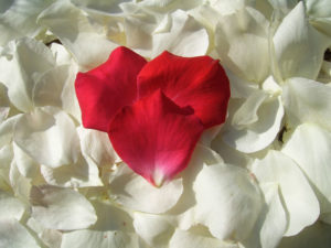 red-heart-petal